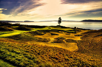 #15 At Chambers Bay Golf Course  Poster by David Patterson