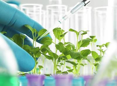 Plant Biotechnology Poster