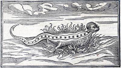 1560 Munster Legendary Fire Salamander Poster by Paul D Stewart