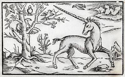 1560 Munster Unicorn Engraving Poster by Paul D Stewart