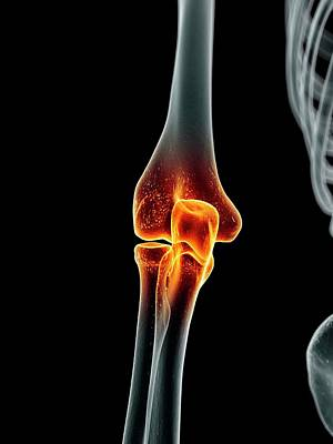 Human Elbow Joint Poster