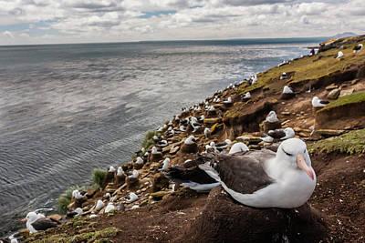 South America, Falkland Islands Poster