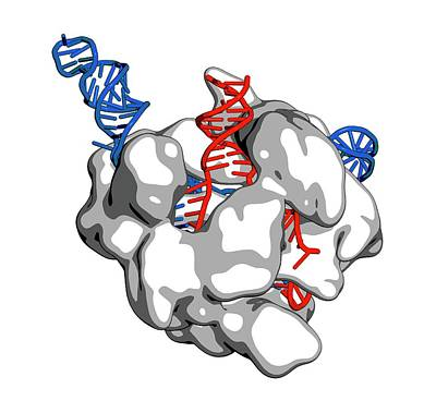 Crispr-cas9 Gene Editing Complex Poster by Molekuul