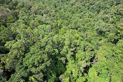 Daintree Rainforest Poster