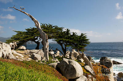 Poster featuring the photograph 17 Mile Drive  by Vinnie Oakes