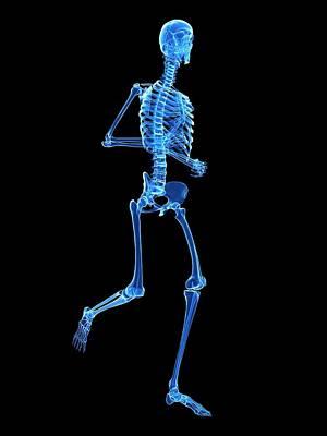 Skeletal System Of Runner Poster by Sebastian Kaulitzki