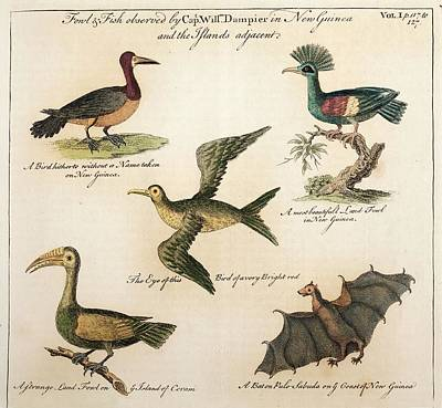 1735 William Dampier Birds Of The Pacific Poster