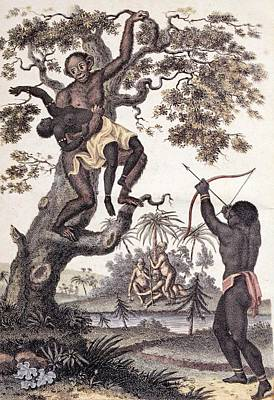 1795 Ape Abducts Woman Sibly Chimp Orang Poster by Paul D Stewart