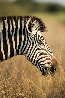 Africa, Botswana, Moremi Game Reserve Poster