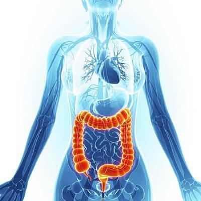 Large Intestine Poster