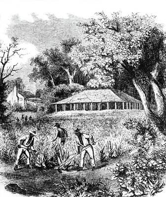 1800s Three African American Men Field Poster