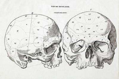 1823 Craniology Craniometry Region Skull Poster by Paul D Stewart