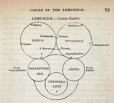 1840 William Swainson Quinary Taxonomy Poster
