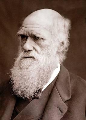 1877 Charles Darwin Portrait Photograph Poster by Paul D Stewart