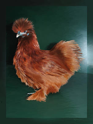 19. Red Silkie Hen Poster