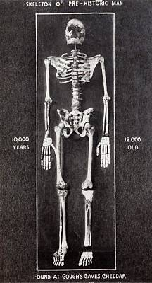 1903 Skeleton Cheddar Man Gough's Cave Poster by Paul D Stewart
