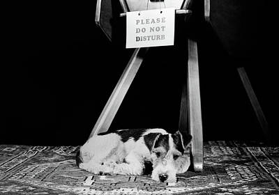 1930s 1940s Wire Fox Terrier Dog Lying Poster