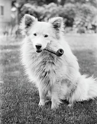 1930s Mongrel Dog Sitting Poster