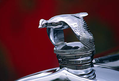 1931 Ford Quail Hood Ornament Poster