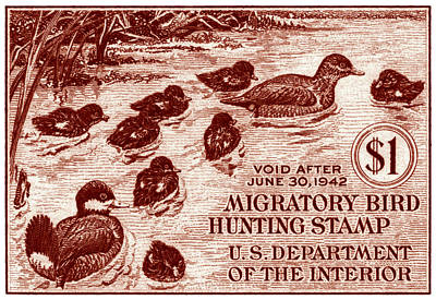 1941 American Bird Hunting Stamp Poster by Historic Image