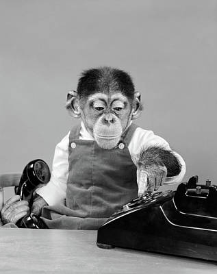 1950s Chimpanzee In Overalls Dialing Poster