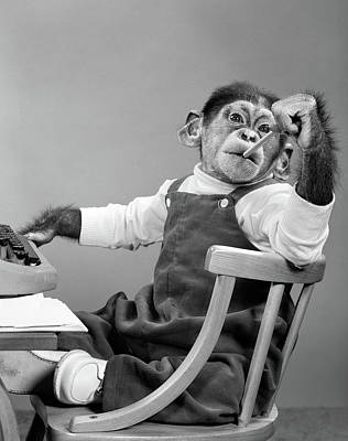 1950s Chimpanzee In Overalls Sitting Poster