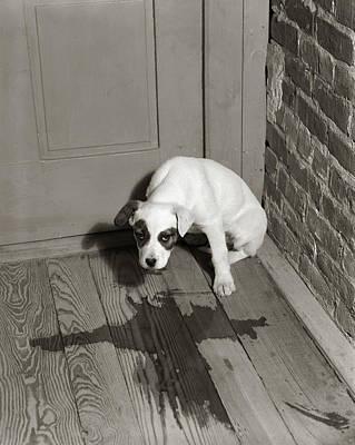 1950s Sad Dog In Corner Ashamed House Poster