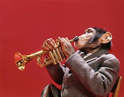 1960s Chimpanzee Wearing Sport Jacket Poster