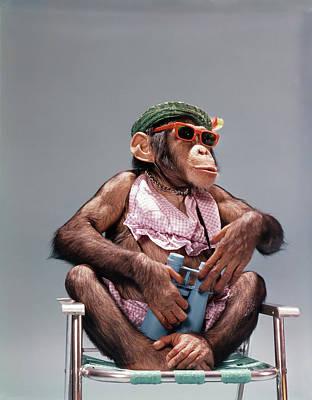 1960s Female Chimpanzee Wearing Summer Poster