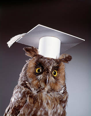 1990s Wise Old Owl Wearing White Poster