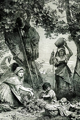 19th C Grape Harvest Poster by Collection Abecasis