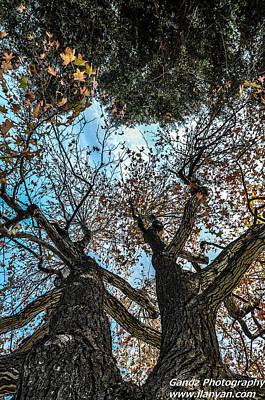 Poster featuring the photograph 1st Tree by Gandz Photography