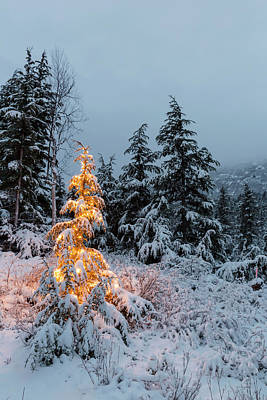 A Festive Mountain Hemlock Evergreen Poster by Kevin Smith