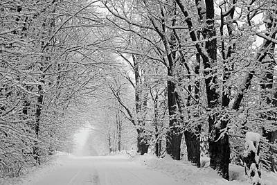 A Snow Covered Road Lined With Leafless Poster
