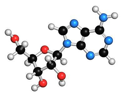 Adenosine Purine Nucleoside Molecule Poster