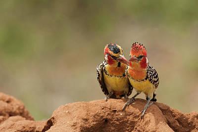 Africa, Kenya, Samburu Game Reserve; Poster