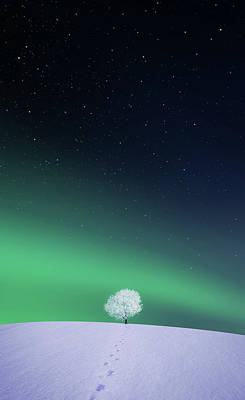Apple Poster by Bess Hamiti