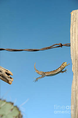 Arizona Fence Lizard Poster by Scott Linstead