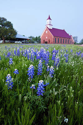 Art Methodist Church And Bluebonnets Poster by Larry Ditto