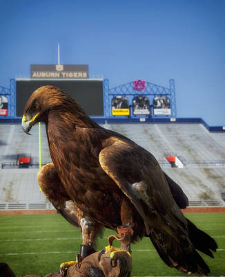 Auburn War Eagle Poster by Mountain Dreams