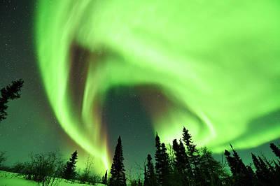 Aurora Borealis Over Trees Poster by Dr P. Marazzi