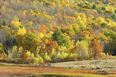 Autumn Colors In Maine Blueberry Field And Forest Poster