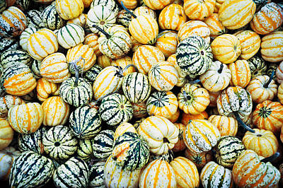 Poster featuring the photograph Autumn Gourds by Crystal Hoeveler