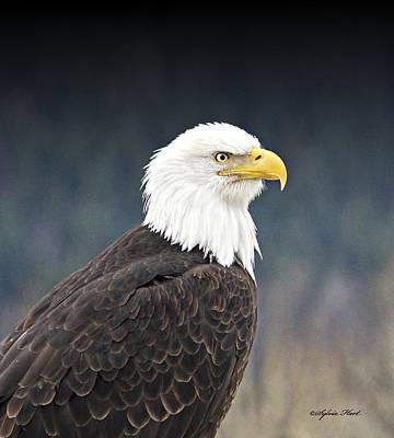 Bald Eagle Poster by Sylvia Hart