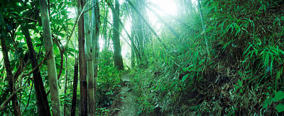 Bamboo Forest, Chiang Mai, Thailand Poster by Panoramic Images