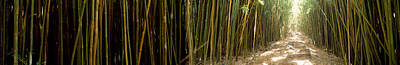 Bamboo Forest, Oheo Gulch, Seven Sacred Poster