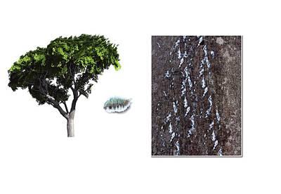 Beech Scale Poster by Mikkel Juul Jensen