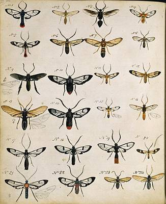 Beetles, 18th Century Illustration Poster by Science Photo Library