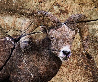 Bighorn Rock Poster