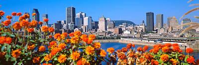 Blooming Flowers With City Skyline Poster